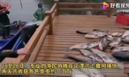 安徽师大校内捞鱼做全鱼宴