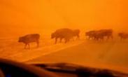 蒙古国强沙尘暴致16万头牲畜死亡