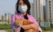 雷神山流浪小奶猫一年后成胖橘