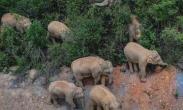 象群逼近昆明 预计将进晋宁区