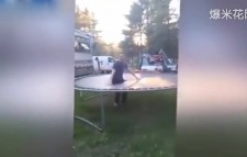 笑喷!男子跳穿蹦床视频走红网络