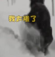 太难了!西藏积雪近腰深 走路全靠挪