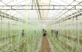 临潼万邦现代农业科技示范园:未来三年实现3000亩土地流转和2000人就业