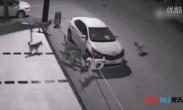 不可思议:监拍好好的轿车居然被一群狗撕了