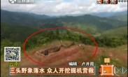 云南:三头野象落水  众人开挖掘机营救