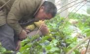 骊佳生态产业园:打造农业生产与农业观光有机结合的生态循环式农业园区