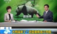荷兰:大熊猫来了!武雯星雅首次亮相