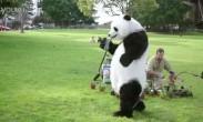 CCTV公益片-文明出游之熊猫篇