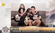 新加坡私人喂养3只大熊猫 刚想报警看笑了