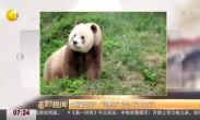 """大熊猫是""""国宝"""" """"没墨""""的它是""""宝中之宝"""""""