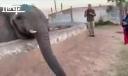 不许拍照!见游客举起手机 正撒娇的大象当场暴怒狠狠甩了一鼻子