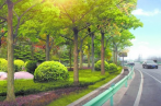 植树增绿书记谈